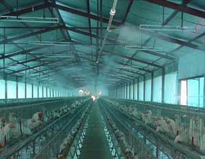 adinter_ro_ventilatie avicultura 2
