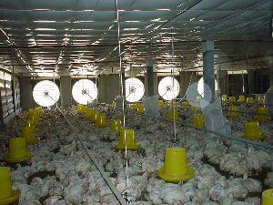 adinter_ro_ventilatie avicultura 9
